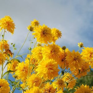 cropped-flower-256776_12801.jpg